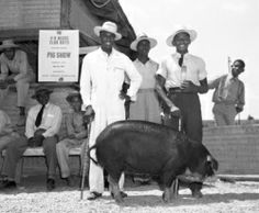 Love the TAMU digital collections.  This is from Toward a Better Living: African American Farming Communities in Mid-Century Texas    http://repository.tamu.edu/handle/1969.1/91004