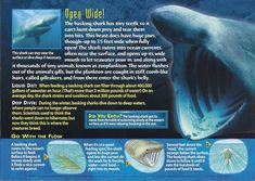 Name: Basking Shark Category: Monsters of the Deep Card Number: 100 Front: Basking Shark Monsters of the Deep card 100 front Back: Basking Shark Monsters of the Deep card 100 back Trading Card: None Basking Shark, Types Of Sharks, Medical Mnemonics, Ocean Current, Shark Swimming, Underwater Creatures, Wild Creatures, Animal Facts, Marine Biology