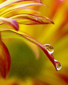 ~~Daisy Drops by Lynn Whitt~~