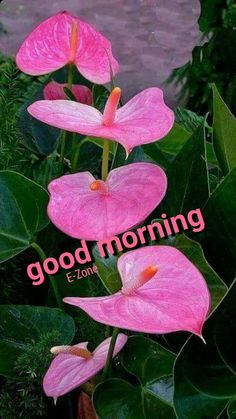 Happy Morning, Good Morning Picture, Good Morning Flowers, Good Morning Good Night, Morning Pictures, Good Morning Images, Great Day Quotes, Morning Love Quotes, Good Morning Messages