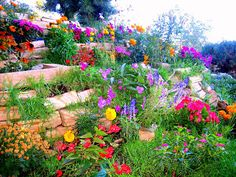 My kind of style, love the colours   : The Backyard Flower Garden