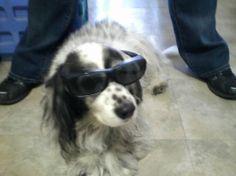 Seahawk in sunglasses. RaDawn standing behind.