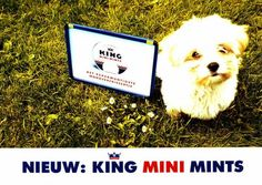 "King MINI Mints: ""DOG"" Print Ad  by LOWE Kuiper & Schouten"