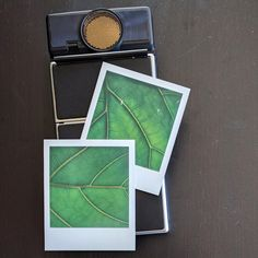 https://www.reddit.com/r/Polaroid/comments/7ei7zp/fiddle_leaf_fig_polaroid_sx70_sonar_impossible/