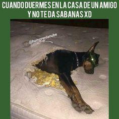 Descarga este meme y muchos mas en nuestra web. ...................................... #humor #memes #momos #memesespañol #momosespañol #imagenesgraciosas #comedia #memes2018 #comedia #humorlatino #momos4k #humornegro #chistes #momazo #momo #mexico #argentina #risas #bromas #venezuela #chile #uruguay #ecuador #colombia