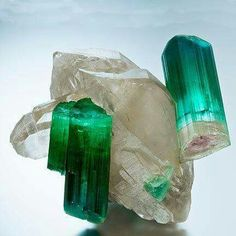 Tourmaline on double terminated Quartz. From Geology Wonders on Facebook.