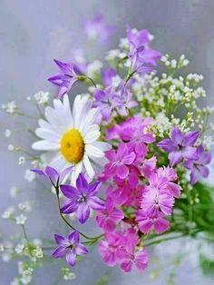 Bouquet of Flowers Flowers Nature, My Flower, Flower Power, Wild Flowers, Beautiful Flowers, Summer Flowers, Spring Blooms, Flowers Bunch, Flowers Gif