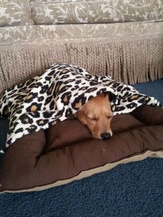 How to make a dog bed with blanket. keep your pets warm this winter.