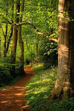and-the-distance:  Path through Wayford Woods, Crewkerne, Somerset