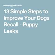 13 Simple Steps to Improve Your Dogs Recall - Puppy Leaks