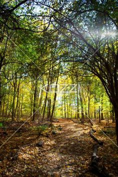 image of a forest with autumn trees. - Scenic image of a forest with autumn trees.