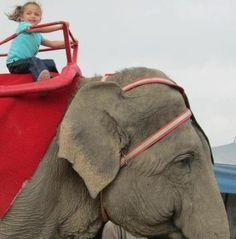 4 year old Alexis having fun riding an elephant!
