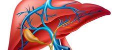 El hígado es el órgano interno más grande del cuerpo humano, indispensable para la vida y responsable de funciones muy importantes que nos ayudan a vivir de forma saludable. Está localizado en el lado derecho del cuerpo, justo debajo del pulmón derecho y protegido por las costillas, y realiza,literalmente, cientos de funciones, entre las cuales se encuentran: El metabolismo que regula la producción y destrucción o utilización del azúcar, grasas, proteínas, colesterol y aminoácidos. Producir…