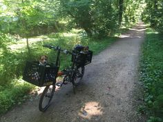 Tern D8 folding bike with 2 milk crates zip tied to front and back racks to carry small terrier dogs.  On C&O canal.