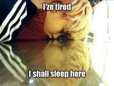 Sleepy Zelo #precious #baby #zelo #adorable #maknae #little #robot #so #freakin #cute #totomato #bap #kpop #meme #macro #funny | http://koreanstarscollections.blogspot.com