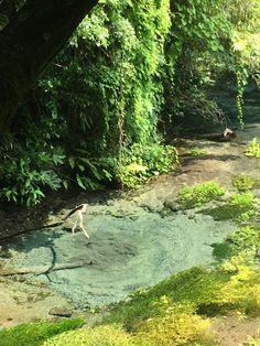 柿田川湧水群 また行きたい! River, Pure Products, World, Rivers, Peace, The World