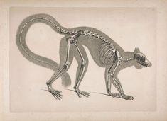 taxonomy illustration