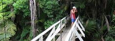 Suspension bridge below the carpark near the start of the track to the Cascade waterfall. The track loops around to the large Cascade Kauri. Nz History, Cascade Falls, Suspension Bridge, Auckland, Ranges, Places To Go, Waterfall, Track, Fair Grounds