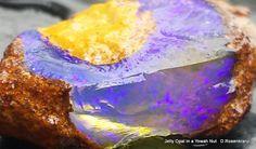 Jelly Opal in a Yowah Nut