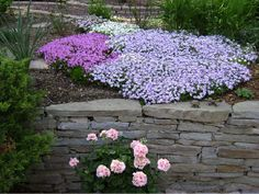 Love creeping phlox....reminds me of my wonderful grandmother....who Im sure is tending a garden in heaven.