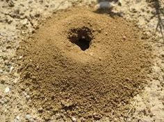 Ant Hill Treatment using Diatomaceous Earth (Crawling Insect Control) | Earthworks Health