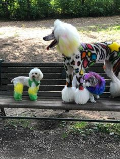 Mud Puppy Spaw Shops' doggies all done in OPAWZ. Thanks Lindsay Bucholz for sharing. Dog Grooming Styles, Dog Grooming Salons, Poodle Grooming, Dog Grooming Business, Samoyed Dogs, Pet Dogs, Dog Hair Dye, Creative Grooming, Diy Dog Toys