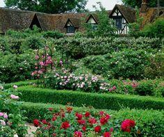 The Rose Garden  - Loseley House