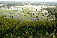 Nature park Kopacki rit #dream #destinations #places #nature #park