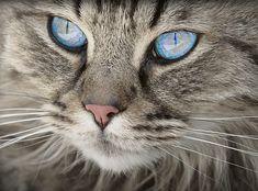 Gato, Animales, Retrato Del Gato