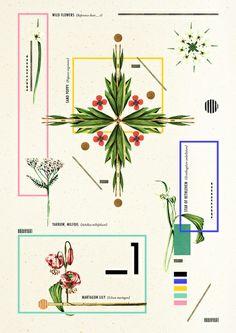 Wild Flowers_1  by Dawn Gardner