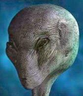 SPECIES: ORELA CLASS: GREY ORIGIN: UNKNOWN FOR: PACIFIC OBJECTIVE: Messenger of Peace BASES ON EARTH ? Observation USA 2013.........SOURCE FREEONDAREVOLUTION.BLOGSPOT.FR............POSTED BY KROMMINO 75........