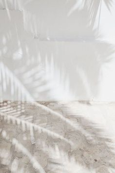 light effects shadow palm trees summer vibes soft palette white neutral (source unknown) Pinterest Color, Outfits In Weiss, Shades Of White, Black And White, Pure White, Foto Top, Good Vibe, White Aesthetic, Aesthetic Design
