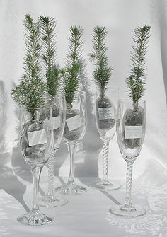 This!! Eco wedding favors - tree saplings-as favor/seating card/toast glass