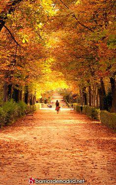 VUELVE A ENAMORARTE DE MADRID. Otoño en el Retiro. Nueva entrada >>> http://barriosdemadrid.net/?p=2156 En otoño, el parque se tiñe de colores de ensueño. Pasear por sus caminos nos transportará a otros mundos y épocas. No hay una visita completa a Madrid sin visitar las 125 hectáreas vegetación y cultura que alberga. El verdadero pulmón de la ciudad. © http://barriosdemadrid.net/?p=2156 #Retiro #Madrid