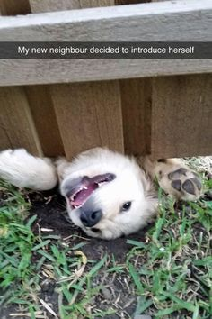 "Down here: | 27 Hilarious Photos That Will Make You Shout, ""I LOVE DOGS, I LOVE THEM SO MUCH"""