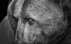 animalsportraits-000