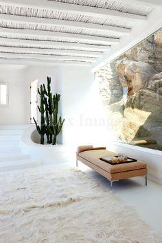 Cactus. Tan leather. White.