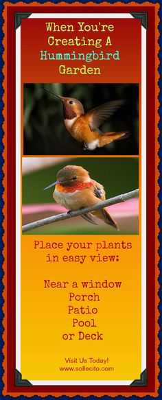 www.Sollecito.com When your're creating a hummingbird garden #Hummingbirds #HummingbirdGarden  #Flowers #LandscapingIdeas