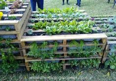 Pallet vertical gardens can be stacked and staggered at different heights depending on your space. | The Micro Gardener www.themicrogardener.com More tips @ themicrogardener.com