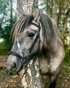 Gorgeous grey horse! Post anything (from anywhere!), customize everything, and find and follow what you love. Create your own Tumblr blog today.