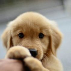 Cute puppy omg my future dog cachorros graciosos, amo los animales, animale Cute Dogs And Puppies, I Love Dogs, Doggies, Adorable Puppies, Cutest Puppy, Cutest Dogs, Common Dog Names, Cute Baby Animals, Funny Animals