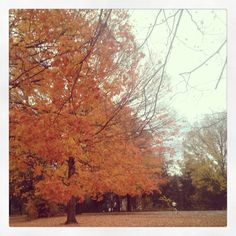 Prospect Park in the Fall :)