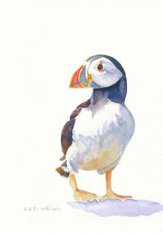 Puffin Drawing Related Keywords & Suggestions - Puffin Drawing Long Tail Keywords