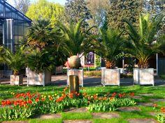 Pflanzenbörse im Botanischen Garten in Würzburg: von der Alpinen Staude bis zum Zitrusbaum zeigen über 50 Aussteller ihre Gewächse, beraten und verkaufen.