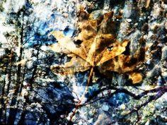 """Bladets liv"" Artistic photo by Laila Cichos"