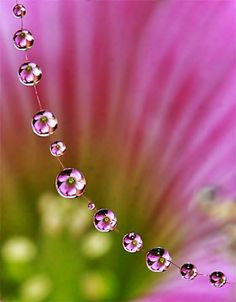 Macro photography - flowers in water droplets....looks like a flower necklace!