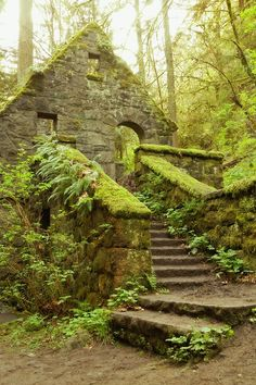 The Stone House Forest Park Portland Oregon photo. Stone House (aka Witches Castle) in the towering pine trees in Forest Park, near downtown Portland, Oregon. Covered in green lichen, moss, and ferns. An abandoned structure from the Forest Park Portland, Downtown Portland Oregon, Oregon Forest, Seattle, Portland Beach, Portland Hikes, Oregon Nature, Portland Garden, Oregon Garden