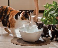 Fontanna dla kota
