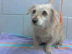 SAFE!..YEEEEYYY........PREGNANT!! RESCUE ONLY - #A476641 Release date 12/13 I am a female, tan Terrier mix. Shelter staff think I am about 3 years old. I have been at the shelter since Dec 08, 2014.  City of San Bernardino Animal Control-Shelter. https://www.facebook.com/photo.php?fbid=10204094953791690&set=a.10203202186593068&type=3&theater RESCUED!!!!