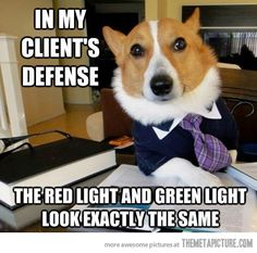 Lawyer Dog gets you out of traffic tickets